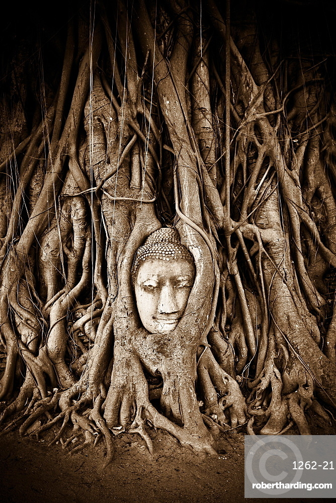 Stone Buddha head statue stands within the branches of a tree in a temple of Ayutthaya, UNESCO World Heritage Site, Thailand, Southeast Asia, Asia