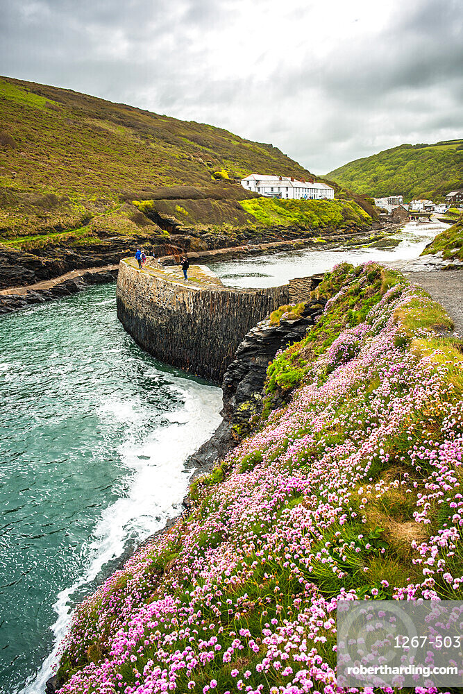 Flowers at Boscastle Harbour in Springtime, Atlantic coast, Cornwall, England, UK.