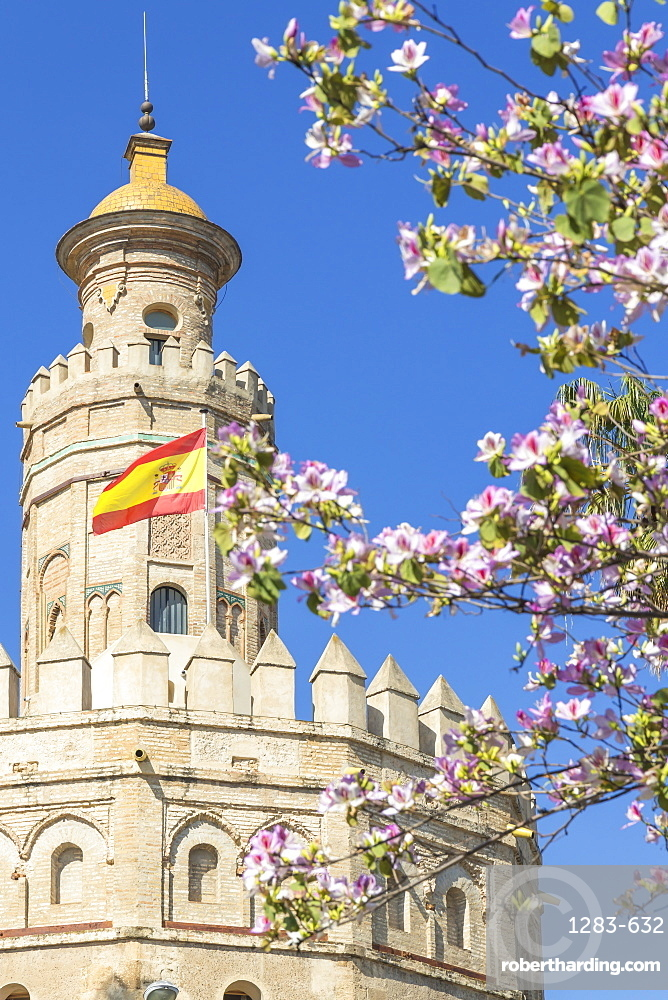 The Golden Tower (Torre del Oro), Seville, Andalusia, Spain, Europe