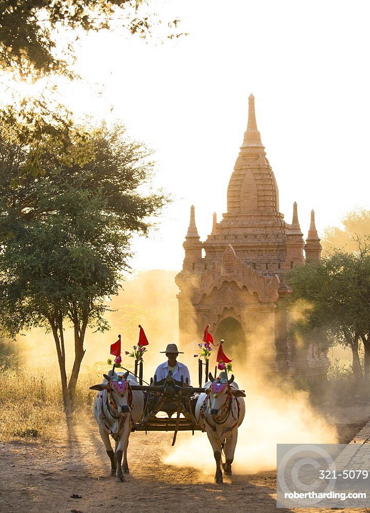 Bullock cart on a dusty track among the temples of Bagan with light from the setting sun shining through the dust, Bagan, Myanmar (Burma), Southeast Asia
