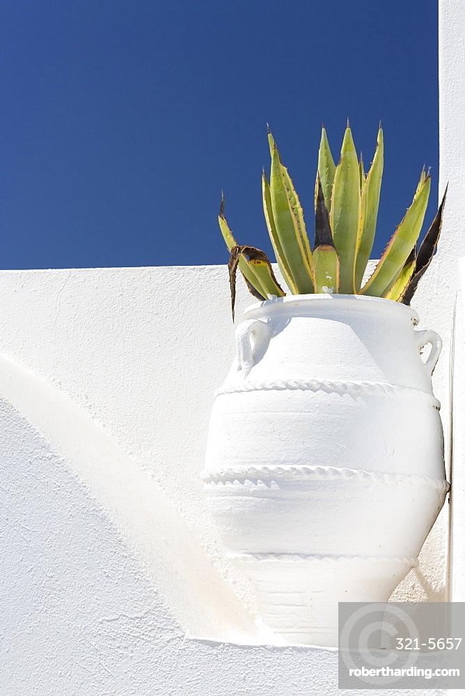 Cacti in whitewashed urn against white wall and blue sky, Imerovigli, Santorini, Cyclades, Greek Islands, Greece, Europe