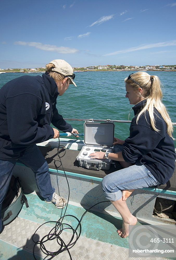 Scientists use hydrophone to track tagged great white shark (Carcharodon carcharias) behaviour, Gaansbai, Western Cape, South Africa, Africa
