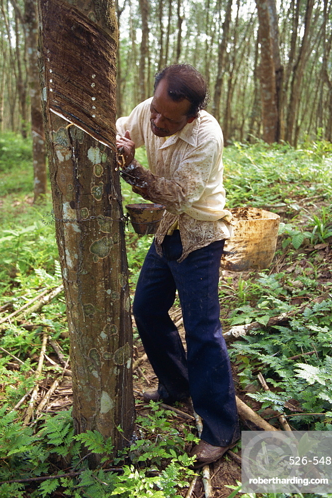Rubber tapping, Malaysia, Southeast Asia, Asia