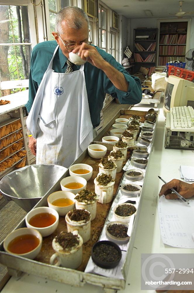 Ravi Kidwai, tea specialist, tasting and assessing tea, Carrit Moran & Company tea brokers, Kolkata, West Bengal state, India, Asia