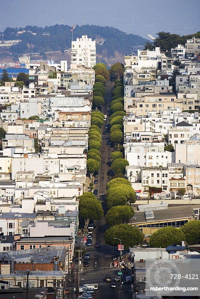 Tree lined street, San Francisco, California, United States of America, North America