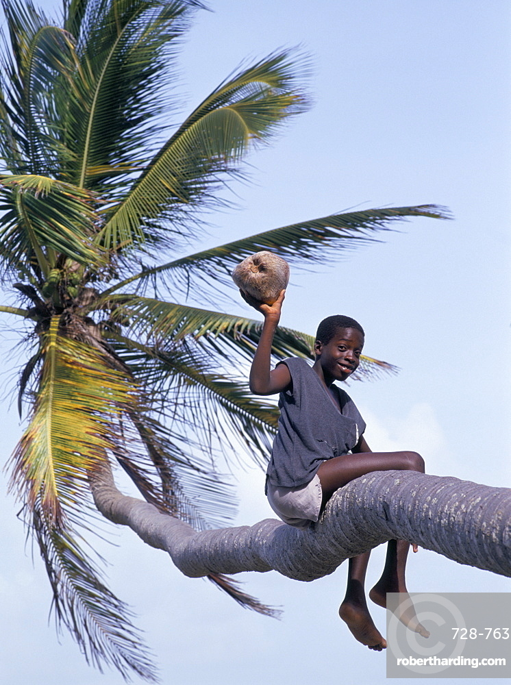 Boy holding a coconut in a palm tree, Tobago, West Indies, Caribbean, Central America