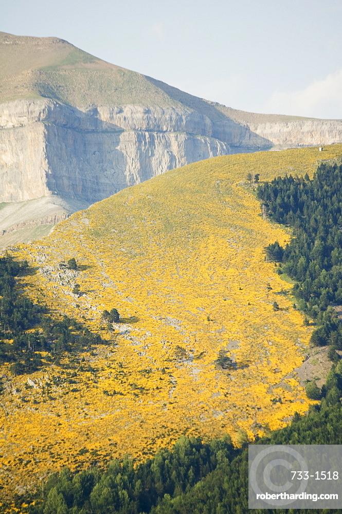 Summer flowers, Ordesa y Monte Perdido National Park, Aragon, Spain, Europe