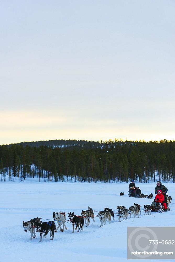 Dog sledding, Jokkmokk, Lapland, Arctic Circle, Sweden, Scandinavia, Europe