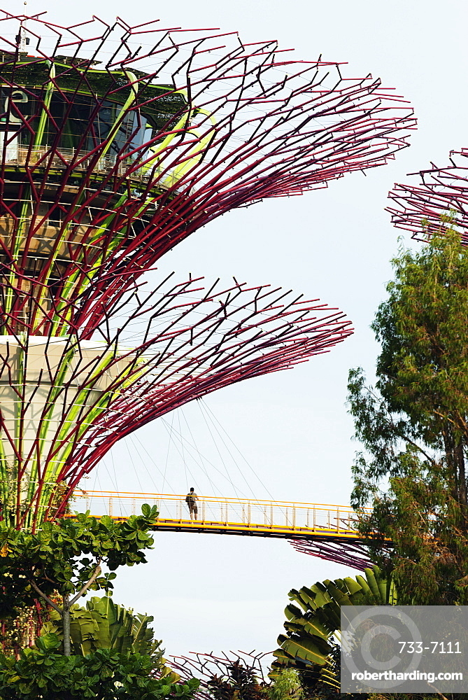Gardens by the Bay, Supertree Grove aerial walkway, Singapore, Southeast Asia, Asia