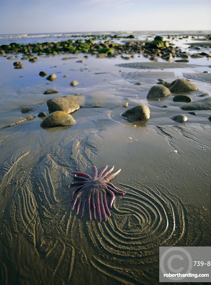 Beach, Queen Charlotte Islands, British Columbia (B.C.), Canada, North America