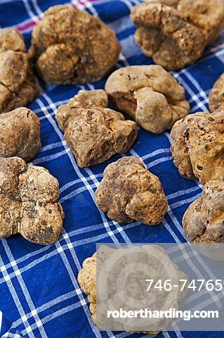 Moncalvo National Truffle Fair, a batch of white truffles (Tuber magnatum) , Asti, Piedmont, Italy, Europe