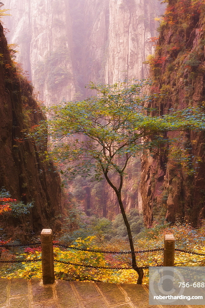 Autumn colors, Xihai (West Sea) Valley, Mount Huangshan (Yellow Mountain), UNESCO World Heritage Site, Anhui Province, China, Asia