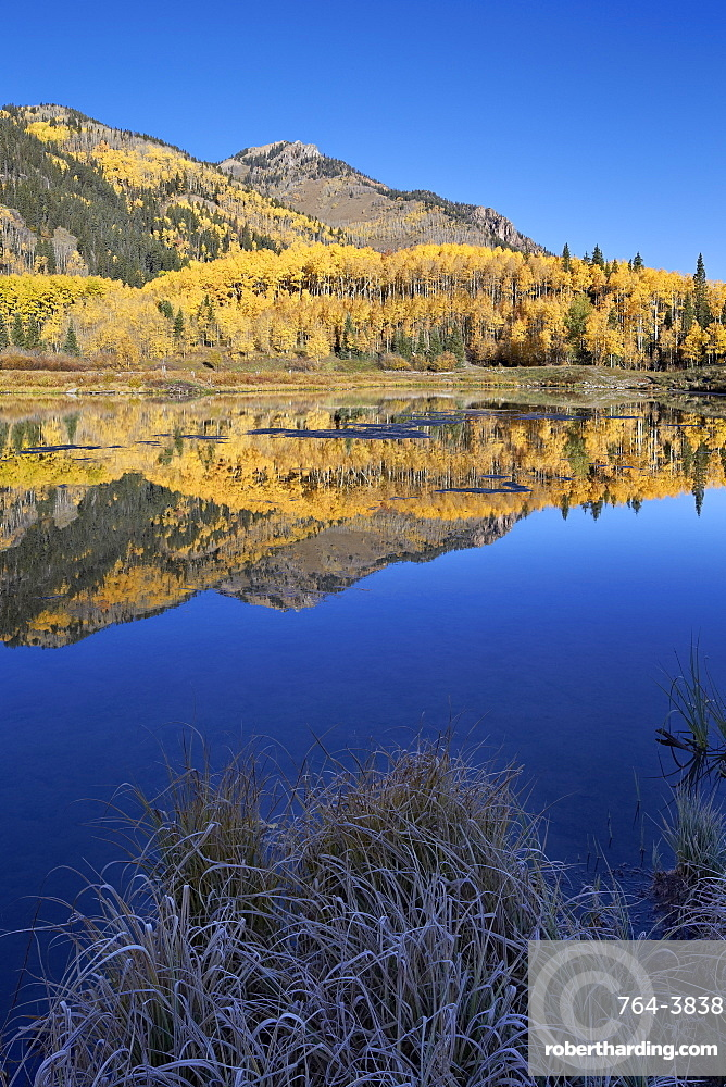 Yellow aspen trees reflected in Priest Lake in the fall, San Juan National Forest, Colorado, United States of America, North America