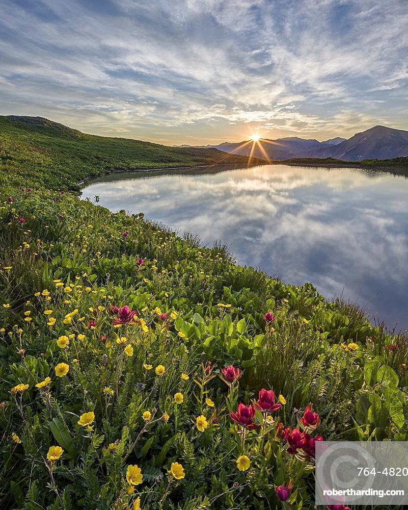 Sunrise behind rosy paintbrush (split-leaf Indian paintbrush) (spliteaf Indian paintbrush) (Castilleja rhexifolia) and Alpine avens (Ross's avens) (Acomastylis rossii turbinata), San Juan National Forest, Colorado, United States of America, North America