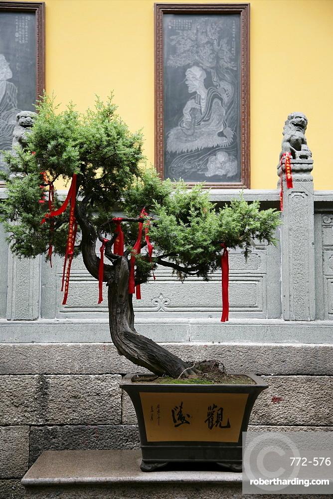 Tree with prayer ribbons, Jade Buddha temple, Shanghai, China, Asia