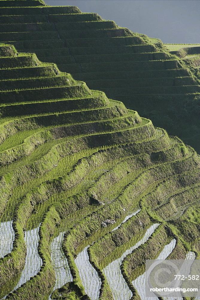 Longsheng terraced ricefields, Guangxi Province, China, Asia