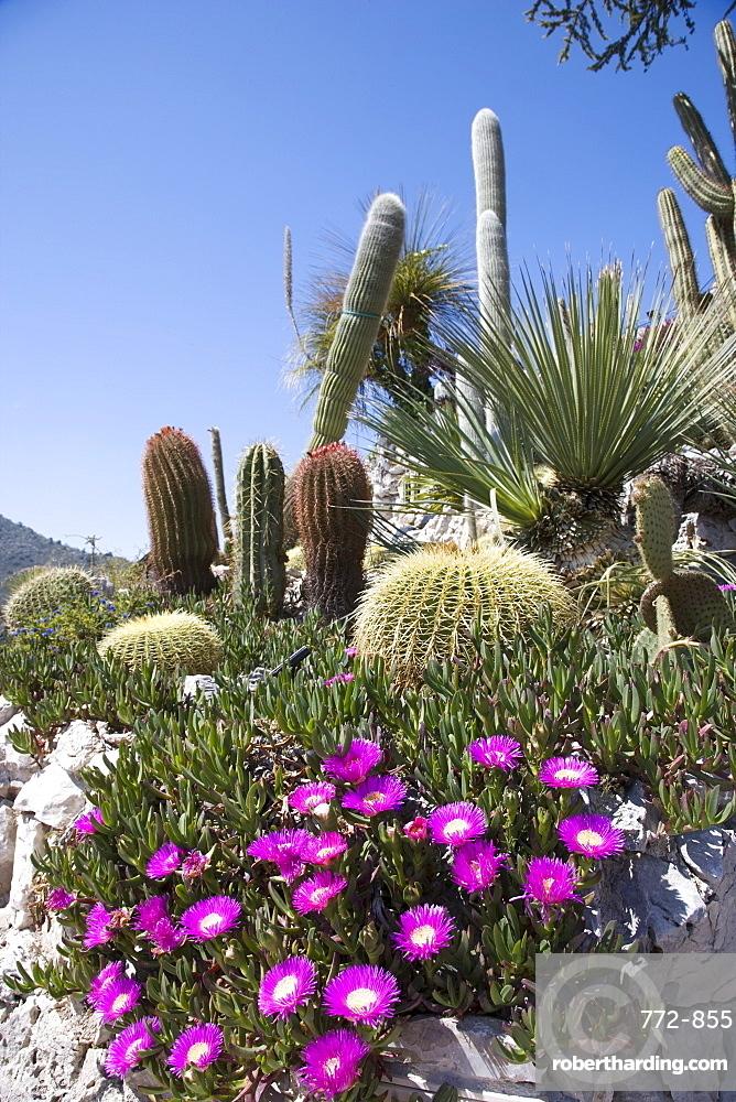 The tropical garden (Jardin Exotique), Eze, Alpes Maritimes, Provence, Cote d'Azur, French Riviera, France, Europe