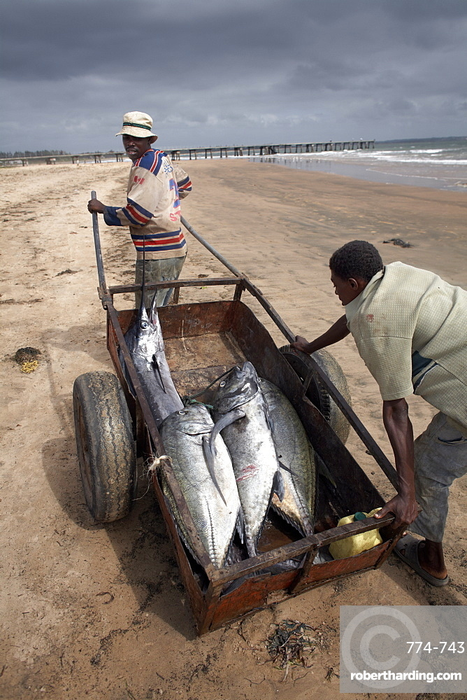 Fishermen with their catch, Malindi, Kenya, East Africa,  Africa