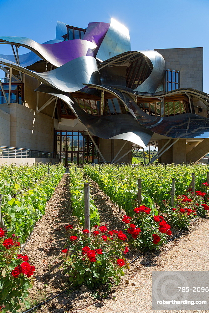 Vines, traditional roses and the striking hotel at Marques de Riscal Bodega, designed by Frank Gehry, near Elciego, La Rioja, Spain, Europe