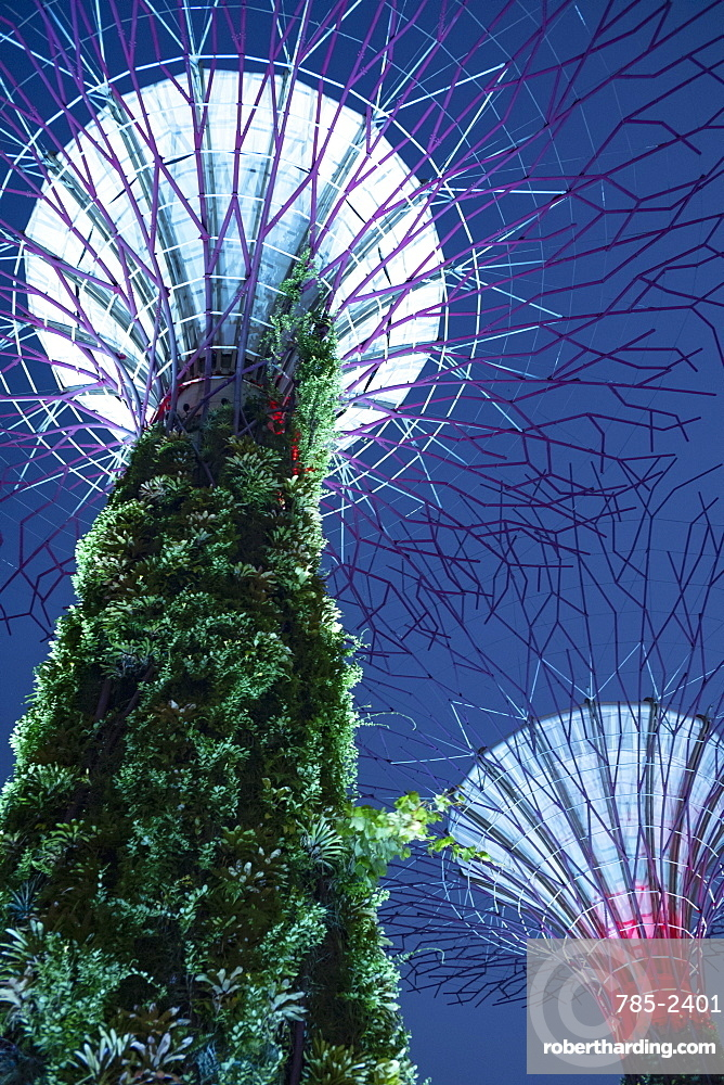 Looking up at the dramatic Supertree Grove, vertical gardens, in the centre of Gardens by the Bay, illuminated at night, Singapore, Southeast Asia, Asia