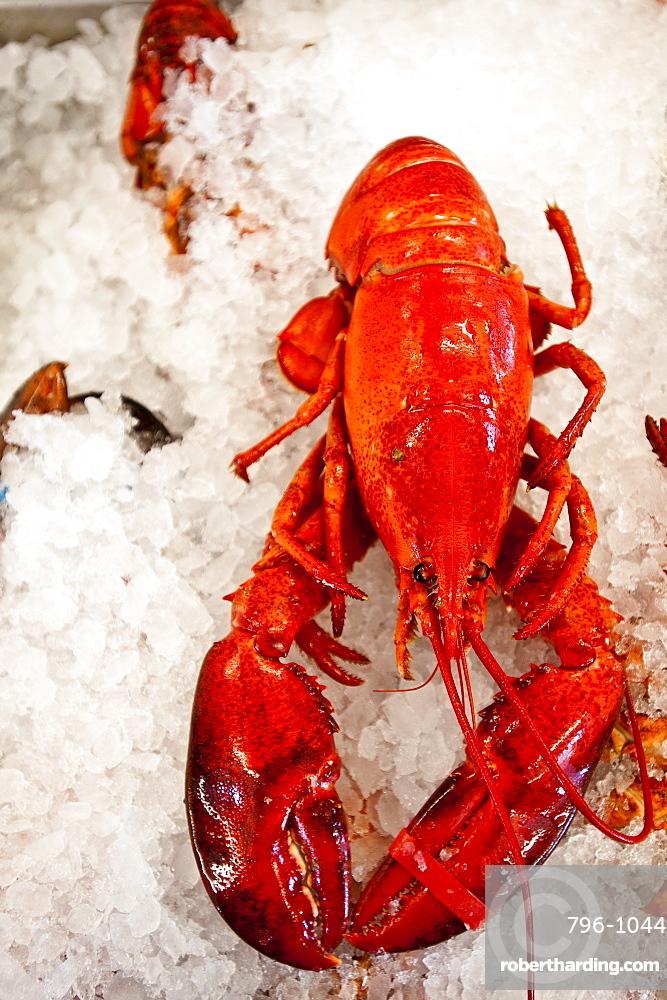 Lobster for sale in Alma, New Brunswick, Canada, North America