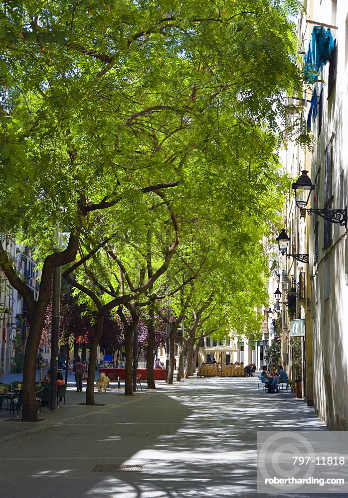 Spain, Catalonia, Barcelona, Small shaded square in the Gothic Quarter district planted with trees in leaf for shade.