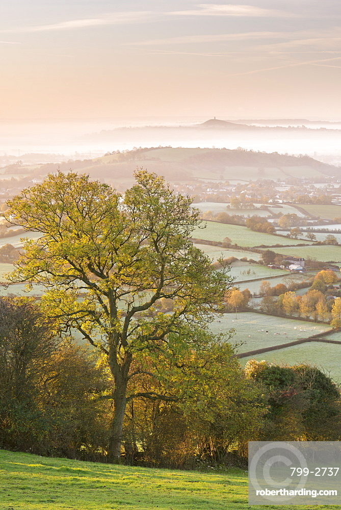 Glastonbury Tor at dawn from the Mendips, Somerset, England, United Kingdom, Europe