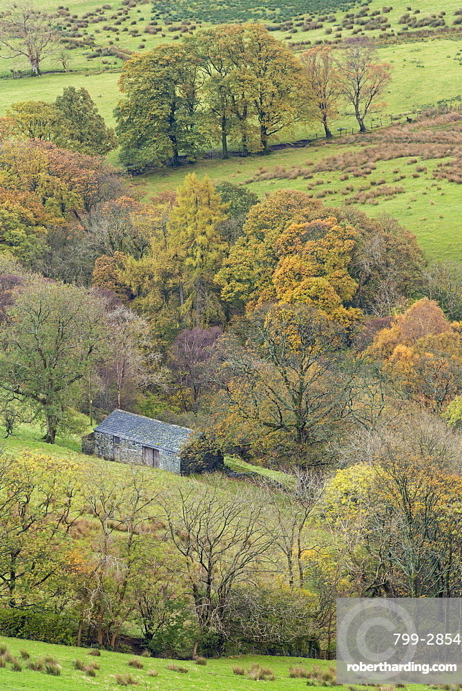 Stone barn surrounded with autumnal trees, Newlands Valley, Lake District National Park, Cumbria, England, United Kingdom, Europe