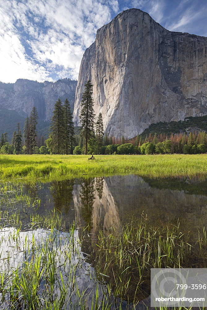El Capitan reflected in a flood pool, Yosemite Valley, Yosemite National Park, UNESCO World Heritage Site, California, United States of America, North America