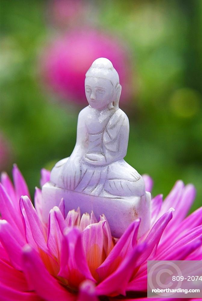 Buddha in dahlia flower, Paris, France, Europe