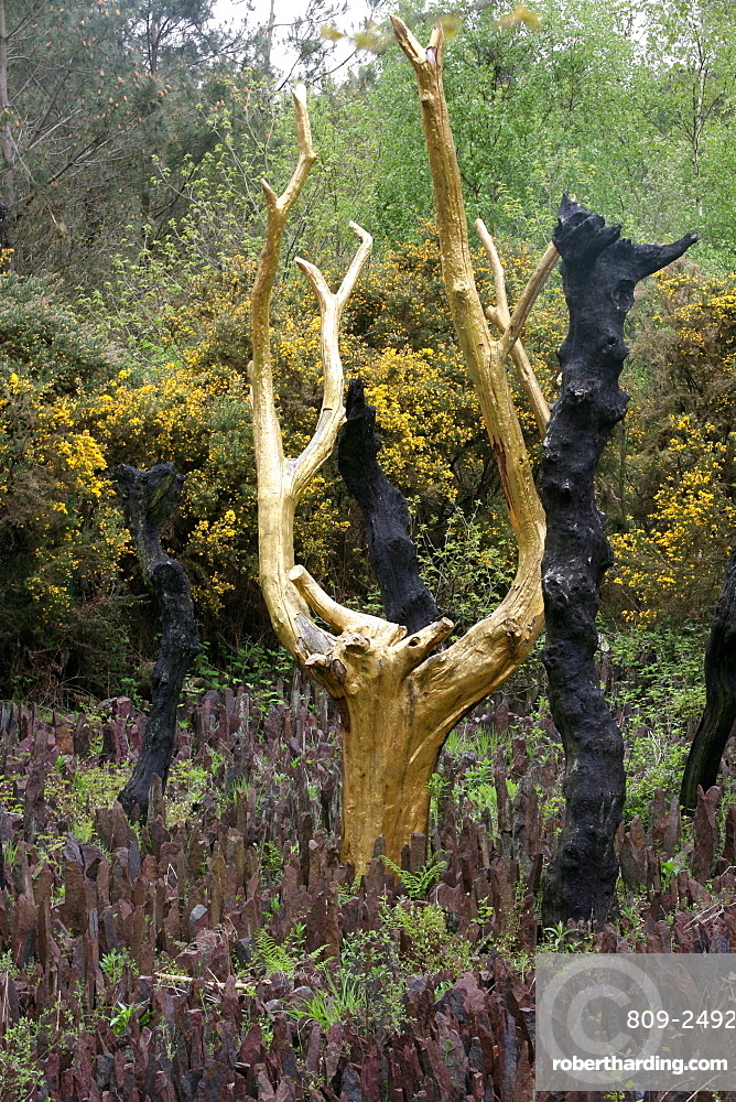 At the heart of the Vale of No Return there is the golden tree, Broceliande Forest, Threhorenteuc, Morbihan, Brittany, France, Europe