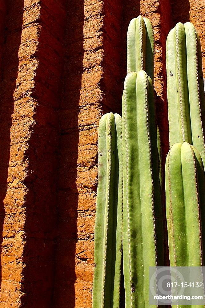 Cactus, Oaxaca, Mexico