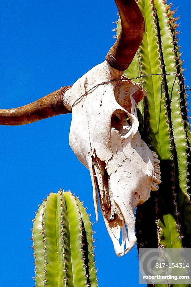 Cactus in Todos Santos, Baja California Sur, Mexico