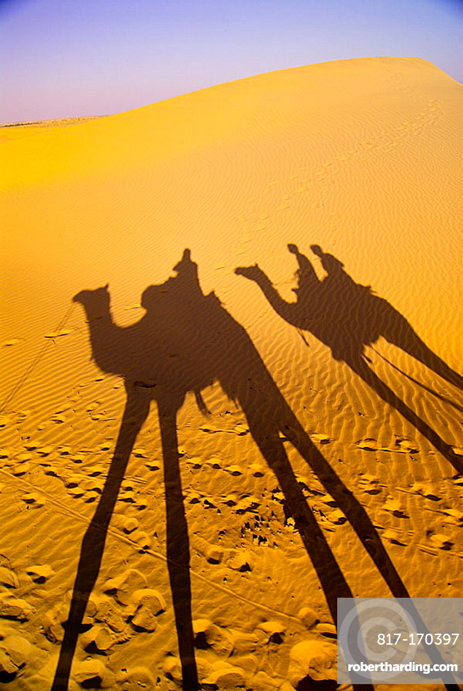 Shadow of camels on sand at the Kanoi Sand Dunes, Thar Desert, near Jaisalmer, Rajasthan, India