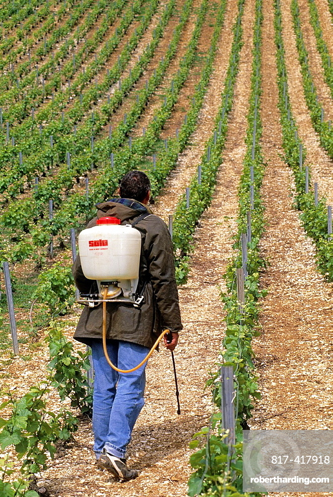 Man at work wearing studded shoes to climb steep slope in the Cotes des Bars vineyards, Aube department, Champagne-Ardenne region, France, Europe
