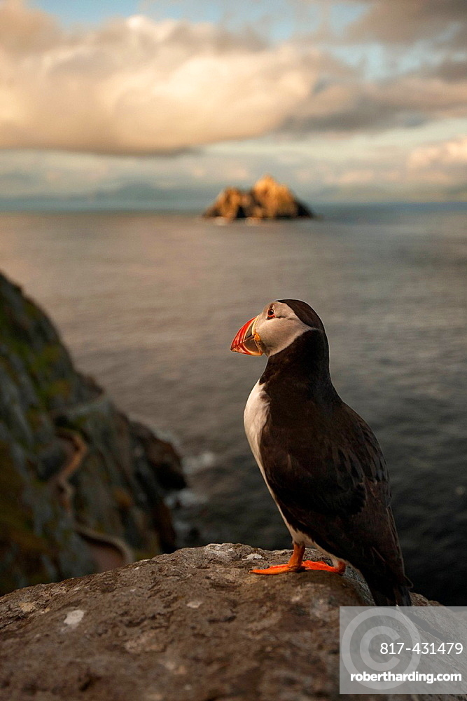 Puffin roosting on cliffs
