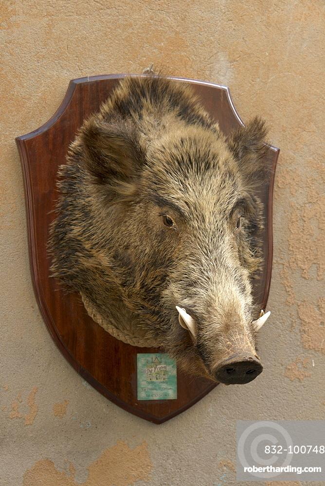 Trophy of a wild boar outside a delicatessen shop, Orvieto, province of Terni, Umbria, Italy, Europe