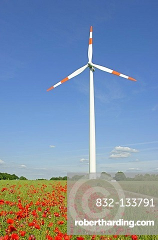 Poppies in front of a wind turbine, Lower Saxony, Germany, Europe