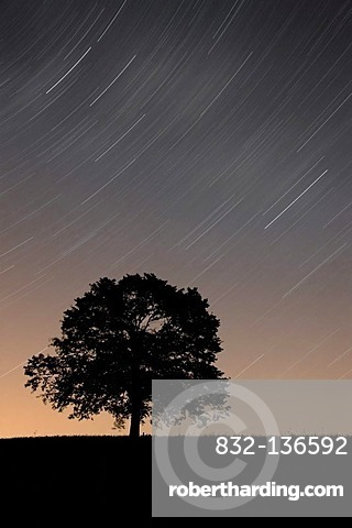 Tree with starry sky, Appenzell, Switzerland, Europe