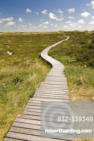 Boardwalk and dunes, Amrum, North Frisia, Schleswig-Holstein, Germany, Europe