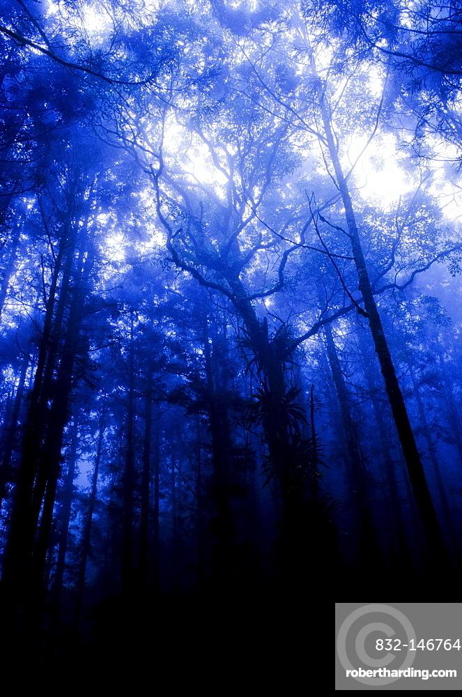 Deep black forest