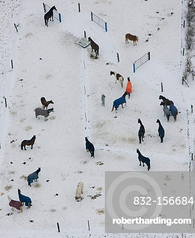 Aerial photo, horses in the snow, horse ranch, Kettwig, Essen, Ruhr area, North Rhine-Westphalia, Germany, Europe
