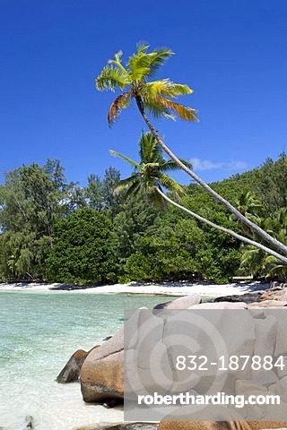 Coconut Palms (Cocos nucifera) and granite rocks on Anse Severe Beach, La Digue Island, Seychelles, Africa, Indian Ocean