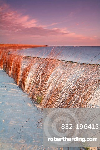 Branches in the sand, beach near the De Slufter nature reserve at sunrise, Texel, Holland, The Netherlands, Europe