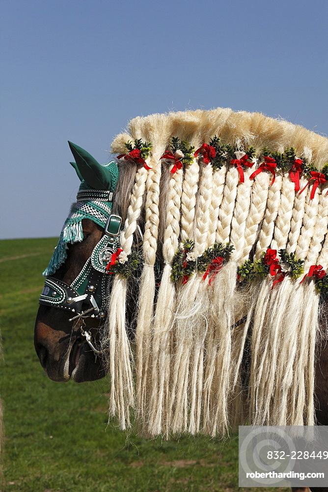 Decorated horse, Georgiritt, George's Ride, Easter procession, Traunstein, Chiemgau, Upper Bavaria, Bavaria, Germany, Europe