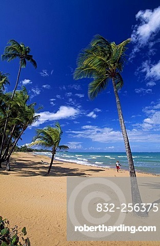 Beach With Palm Trees Coco Stock Photo