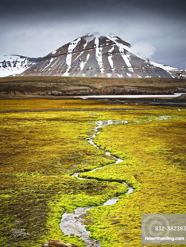 Small stream meandering through a lush field covered in moss, Spitsbergen Island, Svalbard Archipelago, Svalbard and Jan Mayen, Norway, Europe