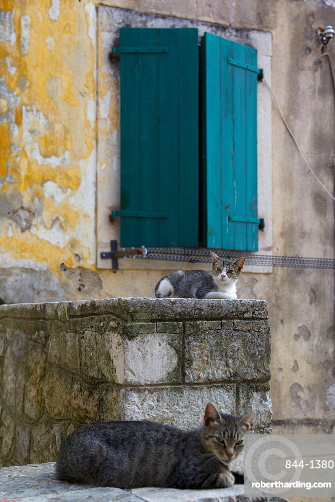 Cats in the Old Town, Kotor, Montenegro, Europe