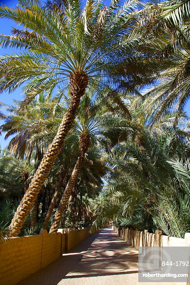 Oasis, Al Ain, Abu Dhabi, United Arab Emirates, Middle East