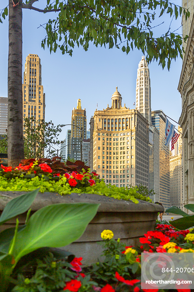 View of flower bed and skyscrapers on North Michigan Avenue, Chicago, Illinois, United States of America, North America